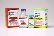 Yervoy treatment