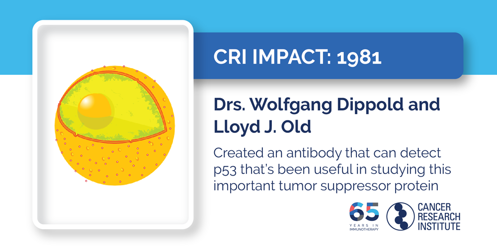 1981 Drs. Wolfgang Dippold and Lloyd J. Old  Created an antibody that can detect p53 that's been useful in studying this important tumor suppressor protein