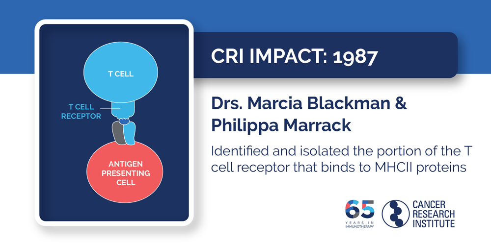 1987 Drs. Marcia Blackman and Philippa Marrack  Identified and isolated the portion of the T cell receptor that binds to MHCII proteins