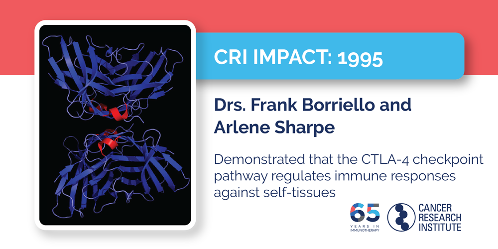 1995 Drs. Frank Borriello and Arlene Sharpe demonstrated that the CTLA-4 checkpoint pathway regulates  immune responses against self-tissues