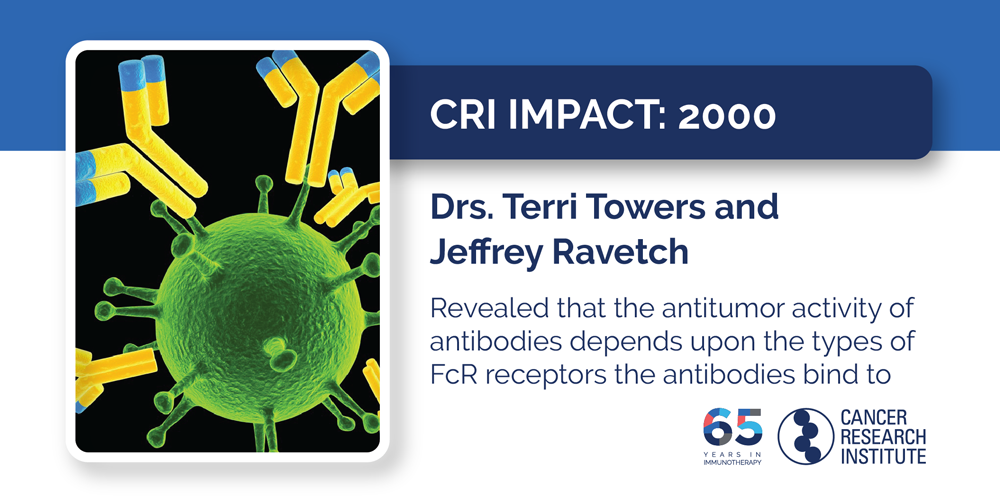 2000 Drs. Terris Towers and Jeffrey Ravetch  Revealed that the antitumor activity of antibodies depends upon the types of FcR receptors the antibodies bind to