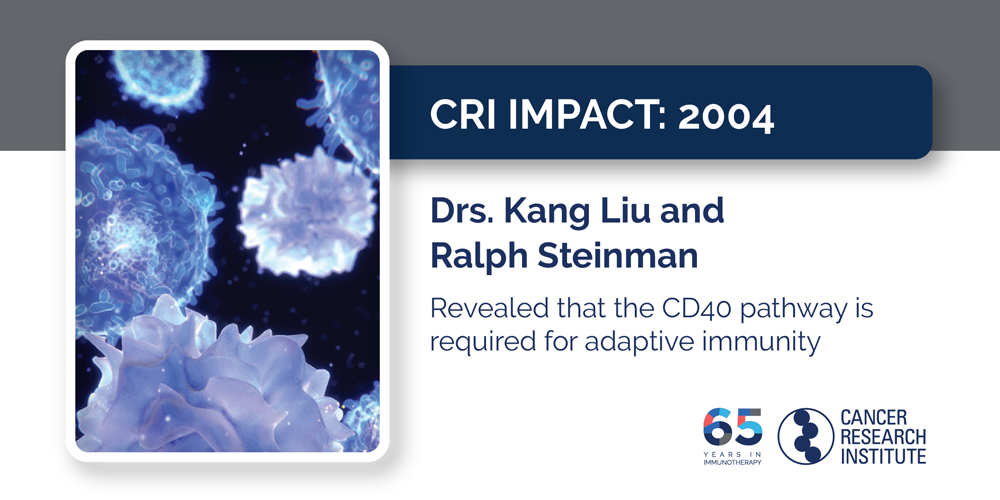 2004 Drs. Kang Liu and Ralph Steinman revealed that the CD40 pathway is required for adaptive immunity