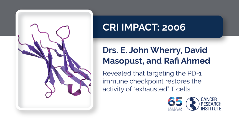 "2006 Drs. E. John Wherry, David Masopust, and Rafi Ahmed revealed that targeting the PD-1 immune checkpoint restores the activity of ""exhausted"" T cells"
