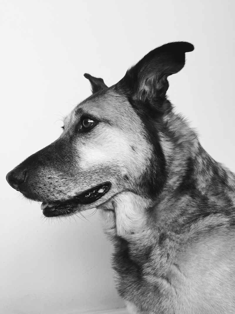 Bosch the Dog in Black and White photo