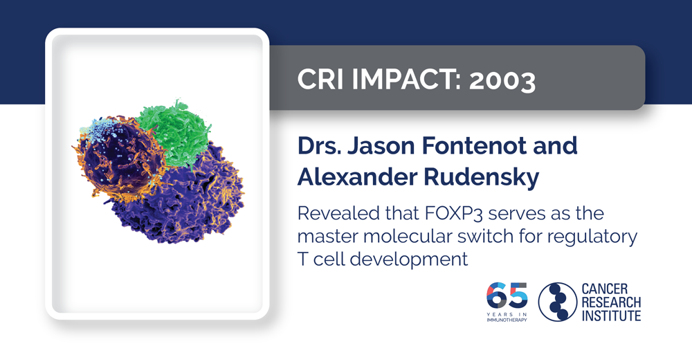 2003 Drs. Jason Fontenot and Alexander Rudensky revealed that FOXP3 serves as the master molecular switch for regulatory T cell development