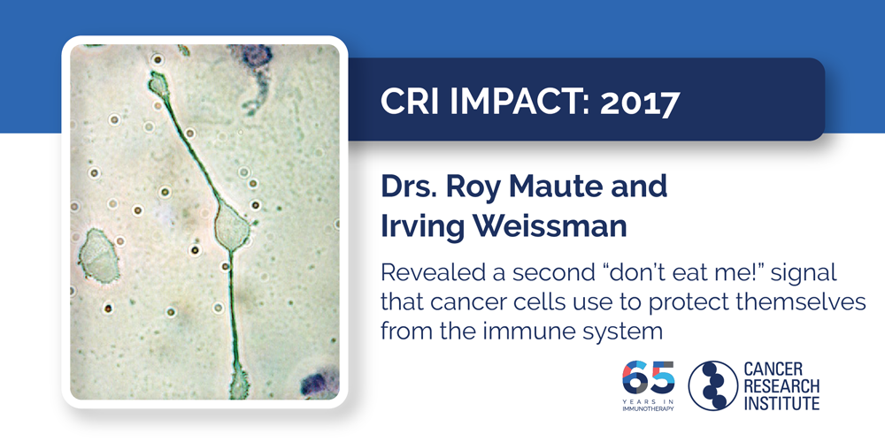 "2017 Drs. Roy Maute and Irving Weissman revealed a second ""don't eat me!"" signal that cancer cells use to protect themselves from the immune system"
