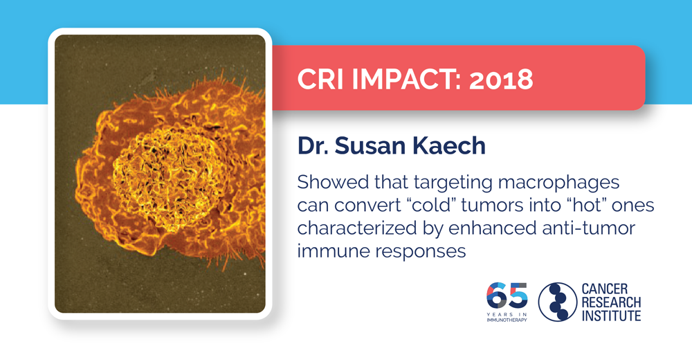 2018 Dr. Susan Kaech showed that targeting macrophages can convert cold tumors into hot ones that the immune system attacks more vigorously
