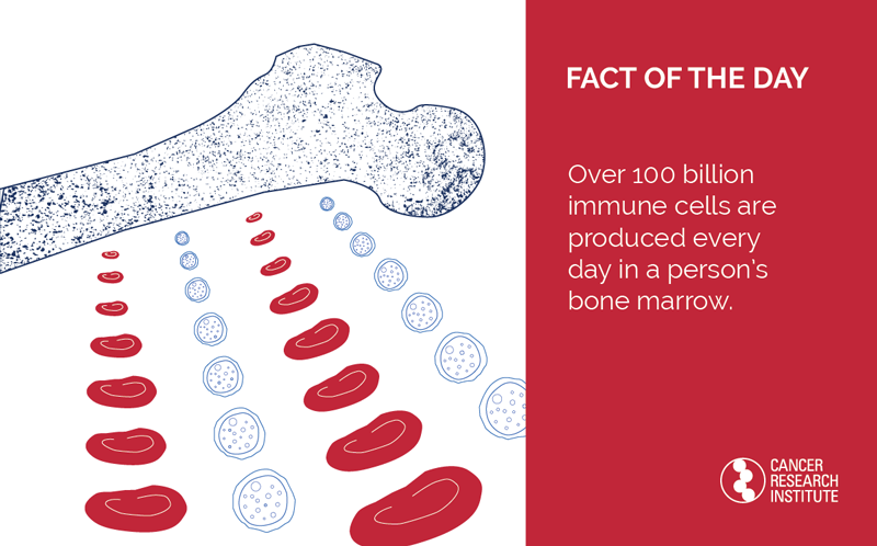 fact of the Day: Over 100 billion immune cells are produced every day in a person's bone marrow.