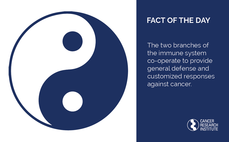 Fact of the Day: The two branches of our immune system co-operate to provide general defense and customized responses against cancer.