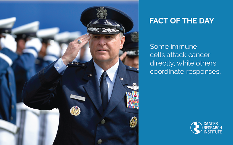 Immunotherapy Fact of the Day: Some immune cells attack cancer directly, while others help coordinate the response.