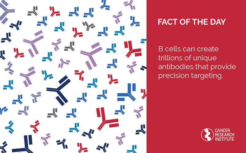 Immunotherapy Fact of the Day: B cells can create trillions of unique antibodies that provide precision targeting.