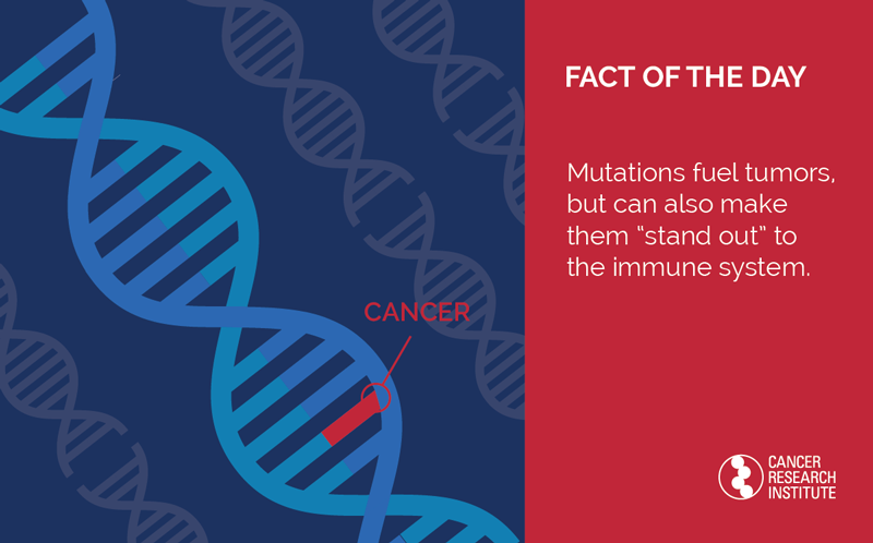 Immunotherapy Fact of the Day: Mutations make tumors stand out to the immune system.