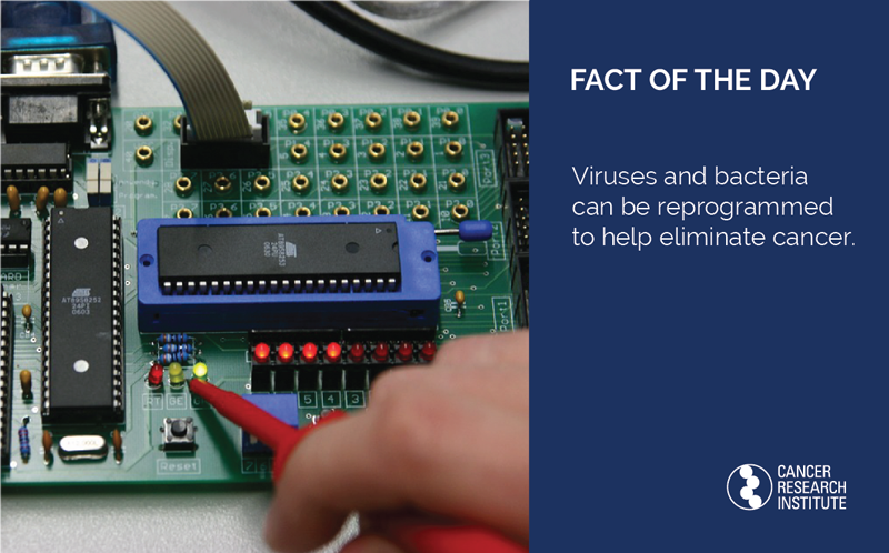 Immunotherapy Fact of the Day: Viruses and bacteria can be reprogrammed to help eliminate cancer.