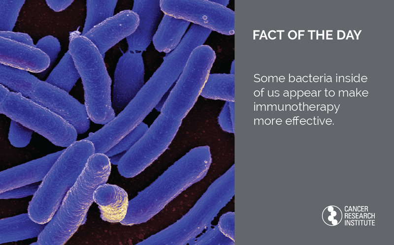 Immunotherapy Fact of the Day: Some bacteria inside of us appear to make immunotherapy more effective.