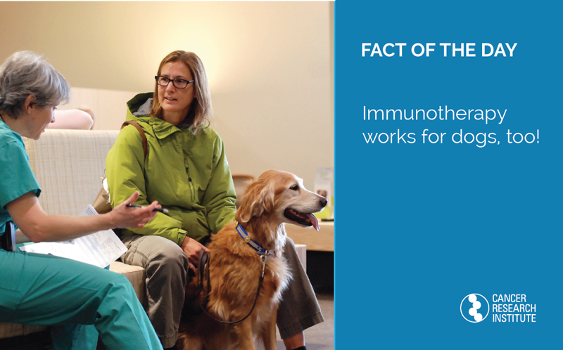 Immunotherapy Fact of the Day: Immunotherapy works for dogs too