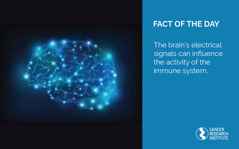 Immunotherapy Fact of the Day: The brain's electrical signals can influence the activity of the immune system.