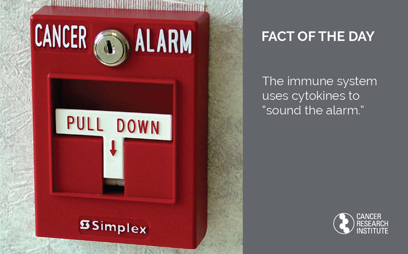 Immunotherapy Fact of the Day: The immune system uses cytokines to sound the alarm.