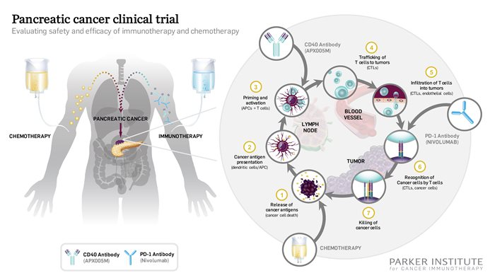 CD40 pancreatic cancer clinical trial graphic press release